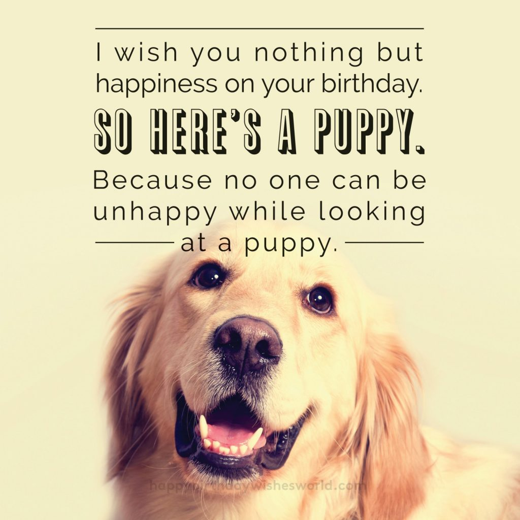 I wish you nothing but happiness on your birthday. So hear's a puppy. Because no one can be unhappy while looking at a puppy.